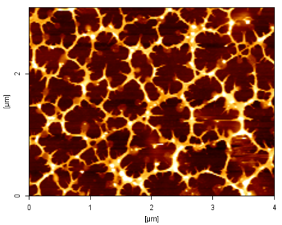 Mark Sprott: Proteins form nanonetworks on a medical grade plastic film covered with polymer brushes created by surface initiated atomic transfer radical polymerisation. The functional polymer brushes provide biomimetic interaction with proteins, allowing control of cell behaviour. AFM scan image shows and area of 15 square microns.